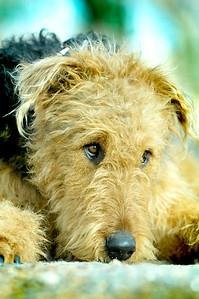 Pet portrait denver