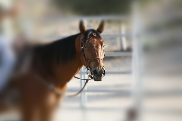 Horse 'N' Around Day ~ MV Equestrian Center