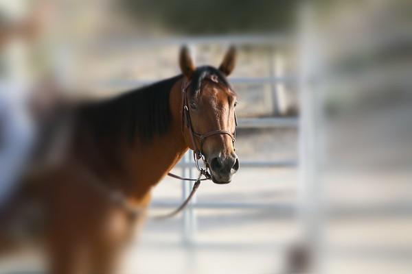 Horse 'N' Around Day ~ MV Equestrian Center