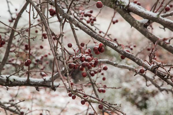 LRPRA winter scenes