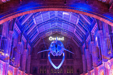 Orsted event at the Natural History Museum