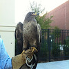 """Migrate to the Memminger"" - a fundraiser for the Center for Birds of Prey"