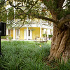 We love sharing with our corporate clients that this is the oldest known YEW (poducarpus) in North America. ...JMC Charleston - Special Event Production and Design offering Destination Management Services in Charleston, South Carolina