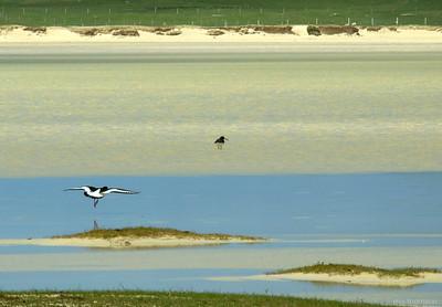 MoThomson_WestHarris13_Nortthon_birds