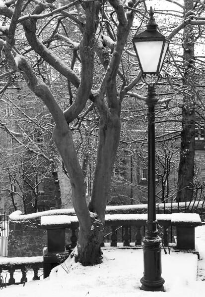 edinburgh tree