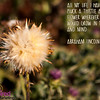 Abe Lincoln Quote - Pluck the Thistle