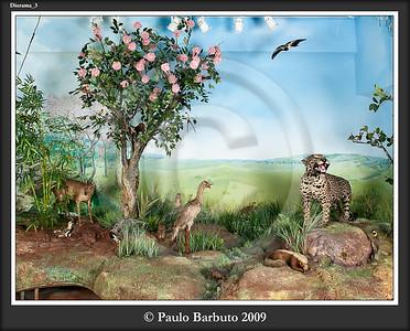 Fotos Diorama Museu Fernão Cardim, Colégio São Luis, 2009.
