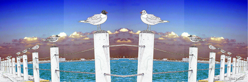 Seagull Committee