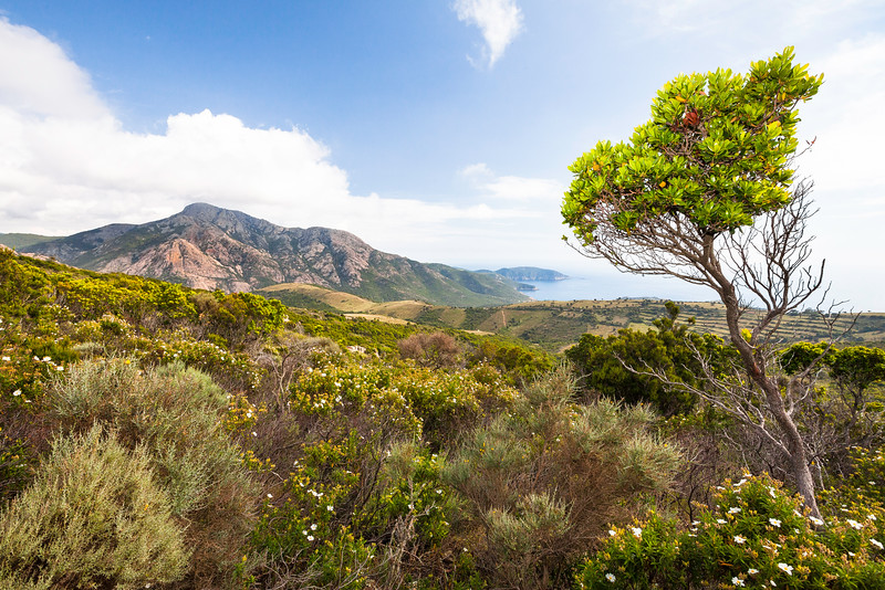 West Coast, Corsica, France