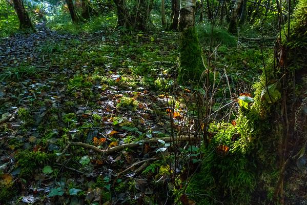 Black Dog Woods