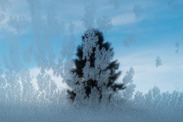 Ice Tree, February 11th