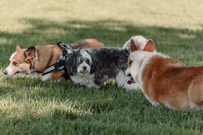 _NIK2696 Cosette Dog Park