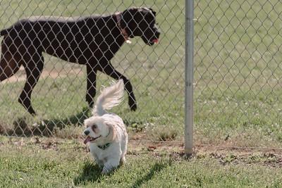 _NIK2674 Cosette Dog Park