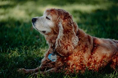 _NIK2825 Cosette Dog Park