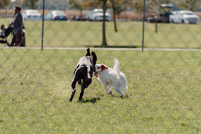 _NIK2681 Cosette Dog Park