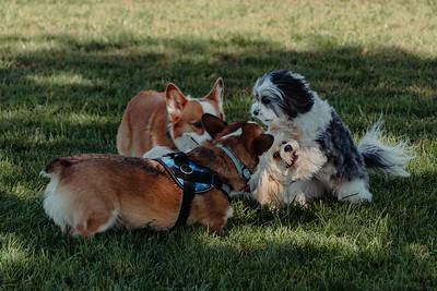 _NIK2799 Cosette Dog Park