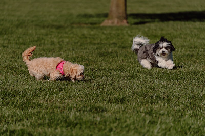 _NIK3040 Cosette Dog Park