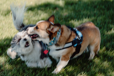 _NIK2983 Cosette Dog Park