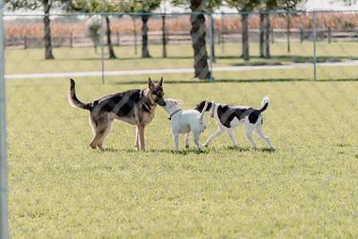 _NIK2935 Cosette Dog Park