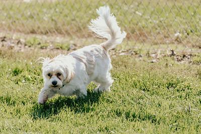 _NIK2742 Cosette Dog Park