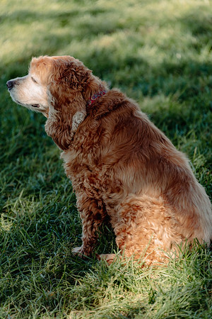 _NIK2815 Cosette Dog Park