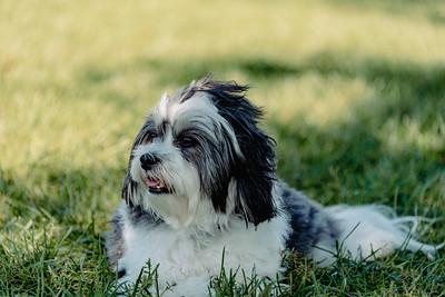 _NIK3020 Cosette Dog Park