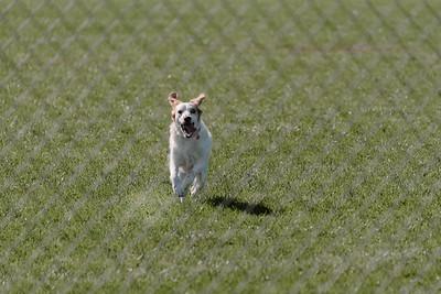 _NIK2676 Cosette Dog Park