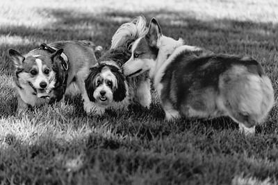 _NIK2699 Cosette Dog Park