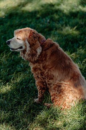 _NIK2813 Cosette Dog Park