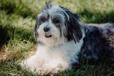 _NIK2850 Cosette Dog Park