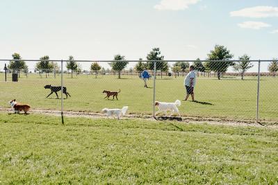 _NIK2736 Cosette Dog Park
