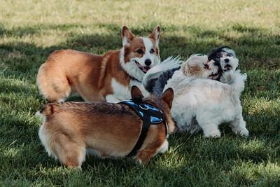 _NIK2795 Cosette Dog Park