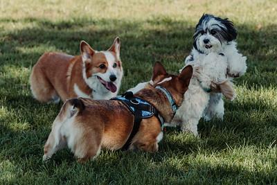 _NIK2797 Cosette Dog Park