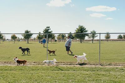 _NIK2734 Cosette Dog Park
