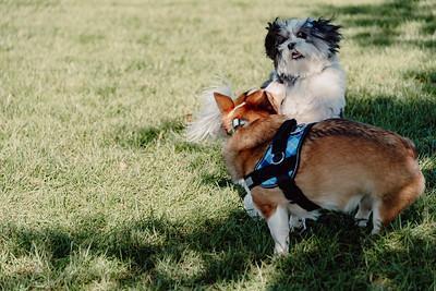 _NIK2975 Cosette Dog Park