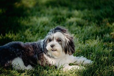 _NIK2920 Cosette Dog Park