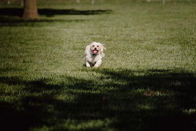 _NIK2868 Cosette Dog Park