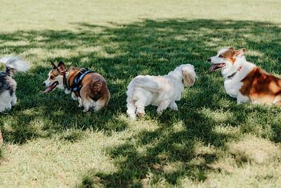 _NIK2761 Cosette Dog Park