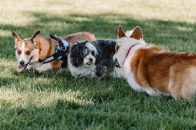 _NIK2697 Cosette Dog Park