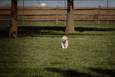 _NIK2861 Cosette Dog Park