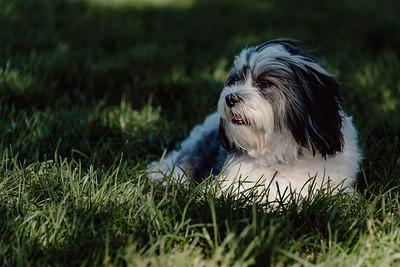 _NIK3042 Cosette Dog Park