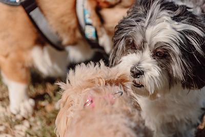 _NIK3010 Cosette Dog Park