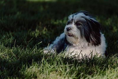_NIK3043 Cosette Dog Park