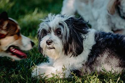 _NIK2829 Cosette Dog Park