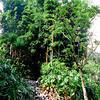 009 Lankester Botanical Gardens, Cartago