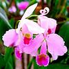 008 Lankester Botanical Gardens, Cartago