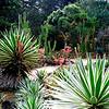 011 Lankester Botanical Gardens, Cartago