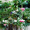 005 Lankester Botanical Gardens, Cartago