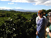Coffee Plantation - Costa Rica