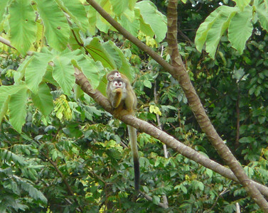 Love the little squirrel monkeys